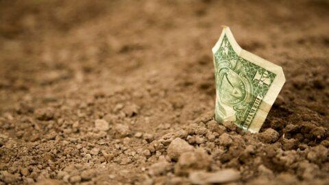 Planta del dinero, ¿Quieres aumentar tu riqueza?