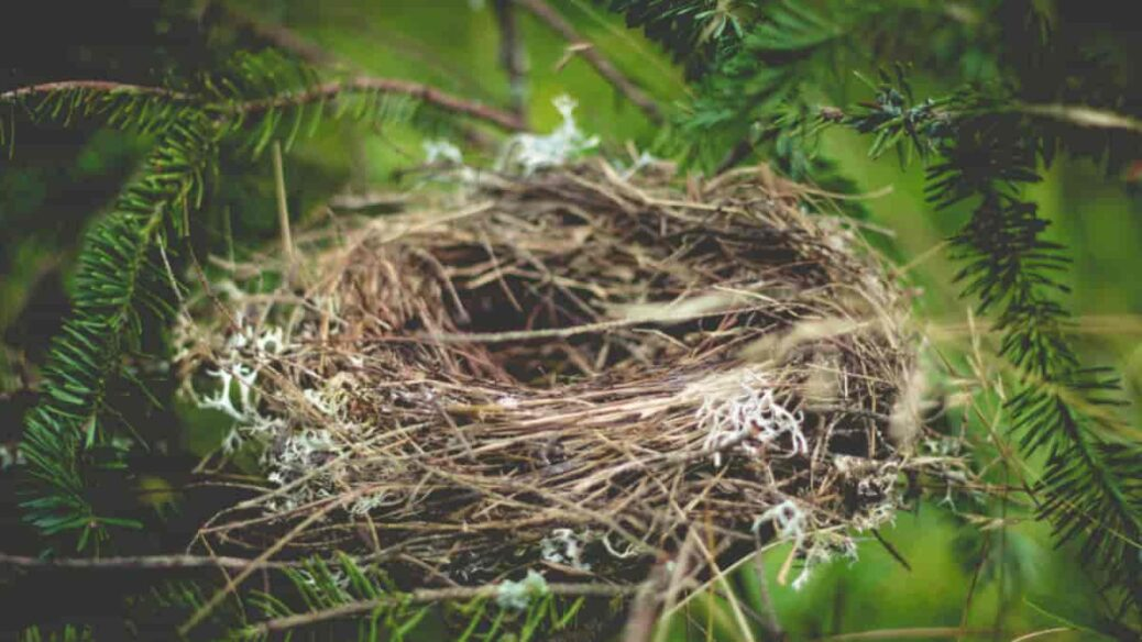 Síndrome del nido vacío, Síndrome del nido vacío ¿qué es , que es el sindrome del nido vacio, sindrome del nido vacio sintomas