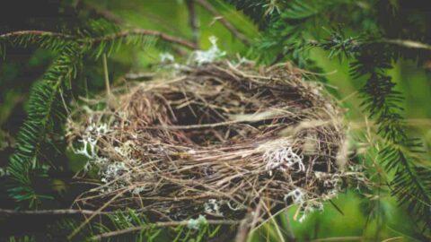 Síndrome del nido vacío ¿qué es?